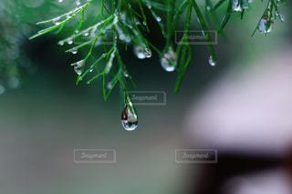 木のクローズアップの写真・画像素材[3286607]