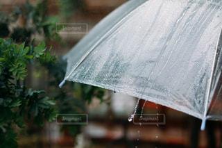 雨の中の青い傘の写真・画像素材[3286610]