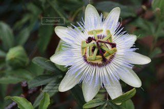 花のクローズアップの写真・画像素材[3286637]