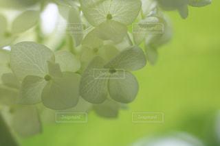 花のクローズアップの写真・画像素材[3286652]