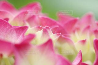 花のクローズアップの写真・画像素材[3286657]
