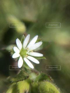花の写真・画像素材[3590267]