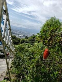 高台から景色を眺めての写真・画像素材[3579791]