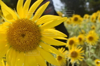 花のクローズアップの写真・画像素材[3580574]