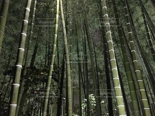 夜の竹林の写真・画像素材[3584268]