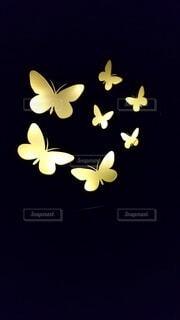 夜の蝶の写真・画像素材[3723679]