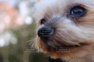 カメラを見ている犬のクローズアップの写真・画像素材[3581393]
