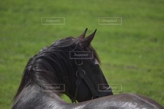 振り返る馬の写真・画像素材[3604633]