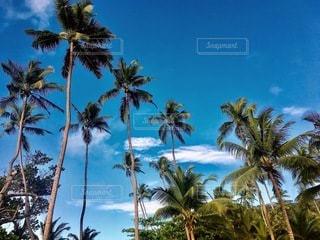 楽園の写真・画像素材[3584374]