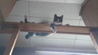 見下ろす猫の写真・画像素材[3585008]