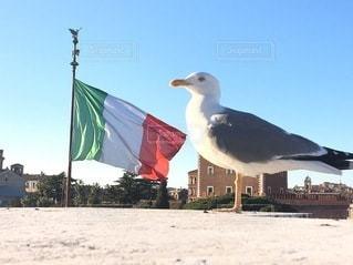 イタリア国旗と鳥の写真・画像素材[3585371]