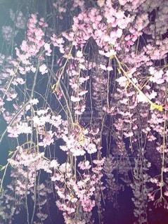花のクローズアップの写真・画像素材[3586630]