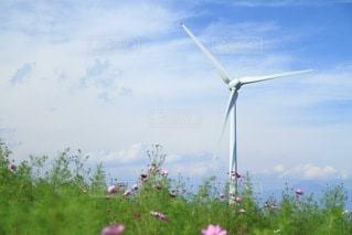 秋桜畑にある風車の写真・画像素材[3590170]