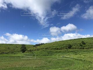 緑豊かな草原の写真・画像素材[3591410]