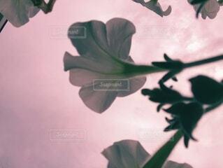 花々達の写真・画像素材[3709531]