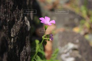 自然の写真・画像素材[165133]