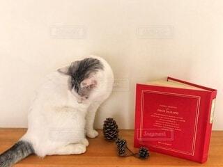 読書の秋はと猫の写真・画像素材[3692990]