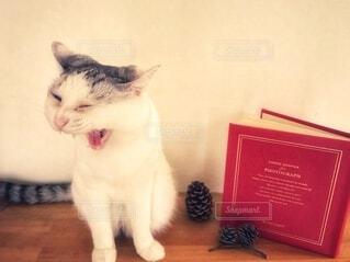 読書の秋と猫の写真・画像素材[3692994]