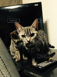 猫の写真・画像素材[150793]