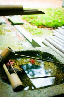 秋の神社の手水に浮かぶ紅葉の写真・画像素材[3600021]