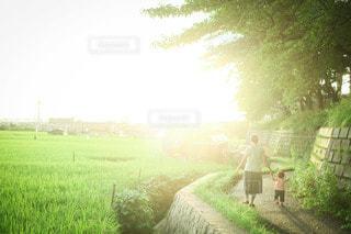 田んぼのあぜ道を散歩中の母娘の写真・画像素材[3606368]