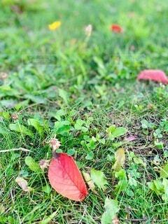草のクローズアップの写真・画像素材[3649890]