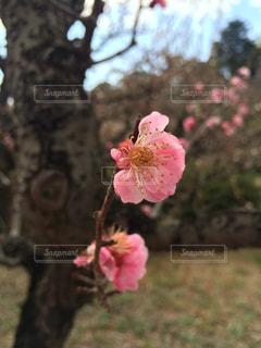 花の写真・画像素材[151124]