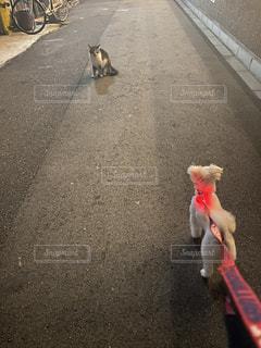ポケモンバトルの写真・画像素材[3602707]