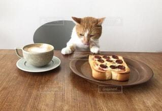 朝食待つ猫の写真・画像素材[3701178]