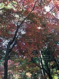 姫路 書写山の写真・画像素材[3888010]
