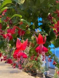 自然庭園の写真・画像素材[4632981]