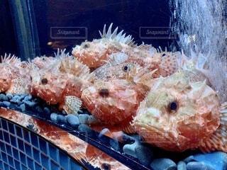 大人しい魚の写真・画像素材[3618875]