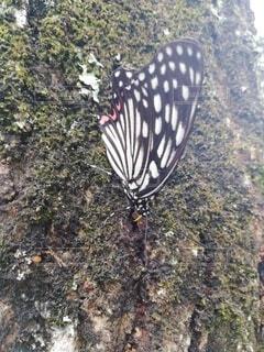 蝶々のクローズアップの写真・画像素材[3701859]