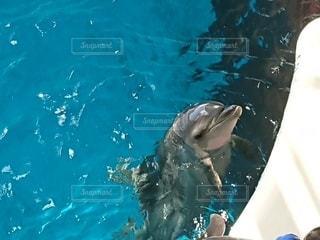 餌を欲しがるイルカの写真・画像素材[3633377]