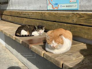 寝てる猫の写真・画像素材[3619348]