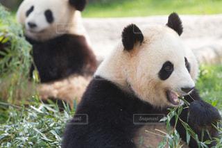 動物の写真・画像素材[444220]
