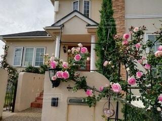 家の前のつるバラの写真・画像素材[3623452]