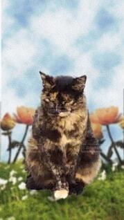 猫と花の写真・画像素材[3623487]