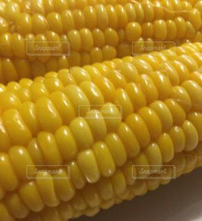 トウモロコシの写真・画像素材[1260706]