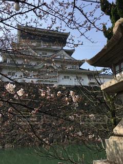 春のお城の写真・画像素材[1269177]