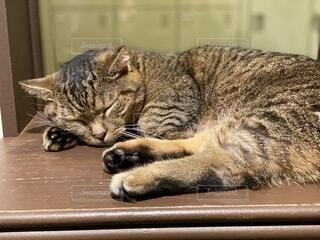 眠っている猫のクローズアップの写真・画像素材[3687229]