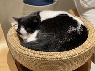 カゴに入った猫の写真・画像素材[3687228]
