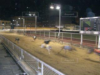 香港のドッグレースの写真・画像素材[3639093]