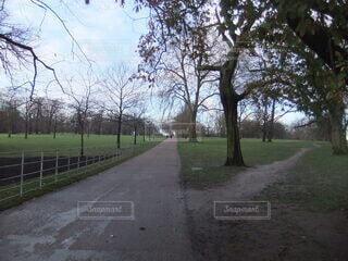 道路の脇に木がある道の写真・画像素材[3681722]