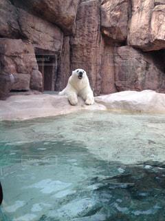 動物園の写真・画像素材[151322]