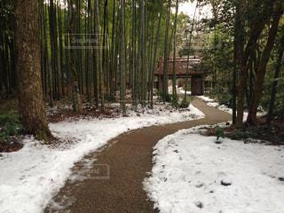 雪景色の写真・画像素材[151332]
