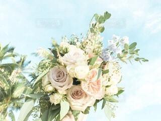 南国の花嫁の写真・画像素材[3629247]