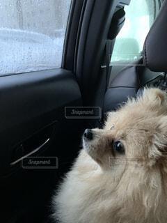 雨の日窓を見つめる犬の写真・画像素材[3647929]