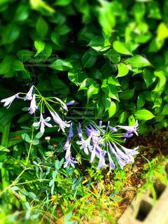 花の写真・画像素材[156860]