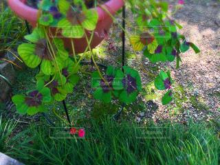 花の写真・画像素材[156863]